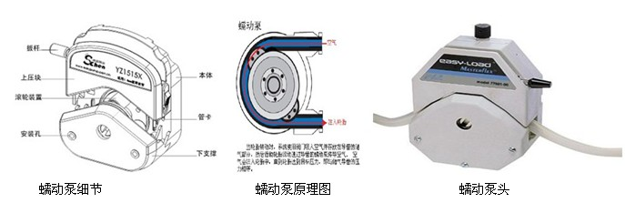 蠕动泵灌装机专用蠕动泵细节